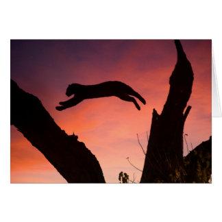 Cartes Léopard sautant au coucher du soleil