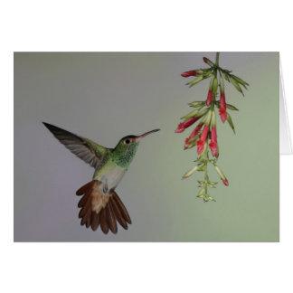 Cartes L'Equateur, loge d'oiseau de Tandayapa.