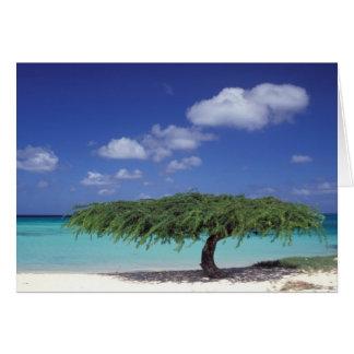 Cartes Les Caraïbe, Aruba. Plage d'Eagle