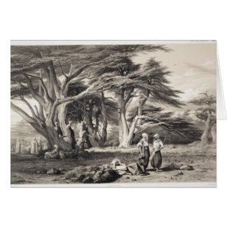 Cartes Les cèdres du Liban, gravés par Freeman (sépia