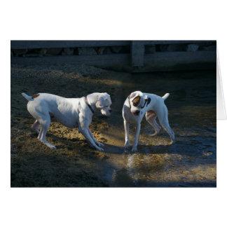 Cartes Les chiens rencontrent leur première vague