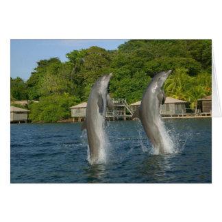 Cartes Les dauphins sautant, Roatan, îles de baie,
