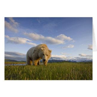 Cartes Les Etats-Unis, Alaska, parc national de Katmai,