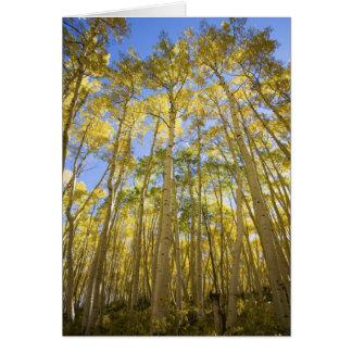 Cartes Les Etats-Unis, le Colorado, trembles d'automne le