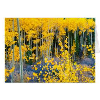 Cartes Les Etats-Unis, le Colorado. Trembles jaunes