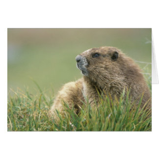 Cartes Les Etats-Unis, Washington, NP olympique, Marmot