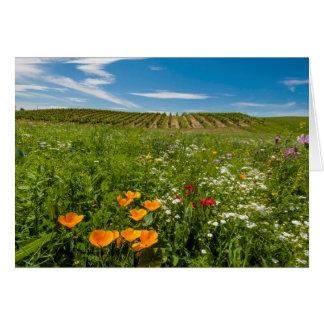 Cartes Les Etats-Unis, Washington, Walla Walla. Fleurs