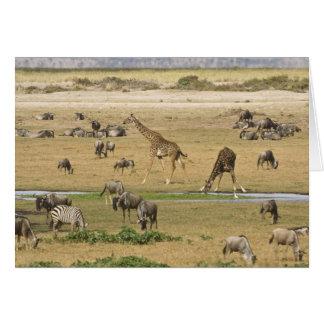 Cartes Les gnous, les zèbres et les girafes recueillent à