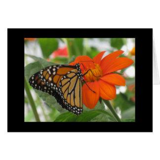 Cartes Les papillons sont libres