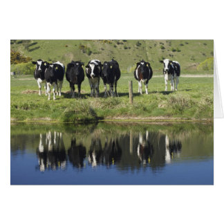 Cartes Les vaches se sont reflétées dans le canal,