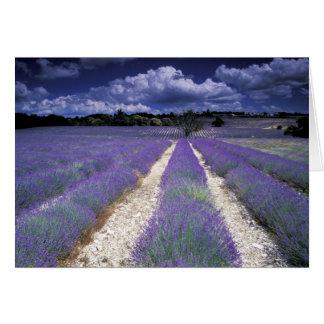 Cartes L'Europe, France, Provence. Champs de Lavander