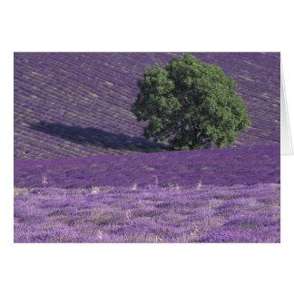Cartes L'Europe, France, Provence, Sault, lavande met en
