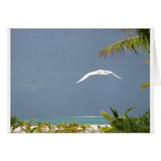 Cartes Liberté dans le paradis paisible