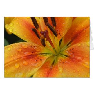 Cartes Lillies sous la pluie