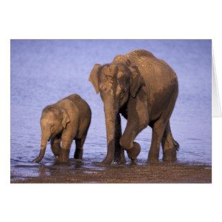 Cartes L'Inde, parc national de Nagarhole. Éléphant