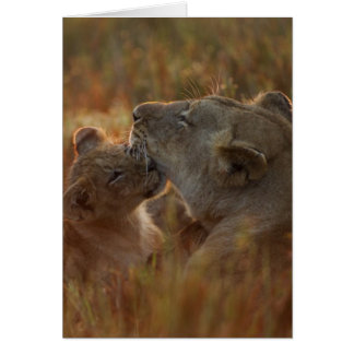 Cartes Lion CUB et parent