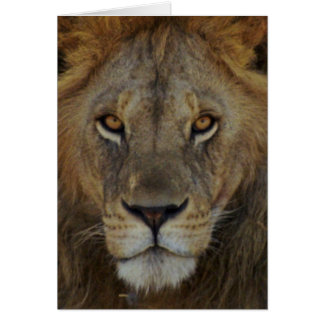 Cartes Lion masculin