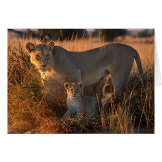 Cartes Lionne (Panthera Lion) et CUB
