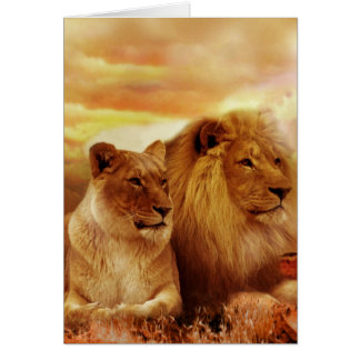 Cartes Lions africains - safari - faune