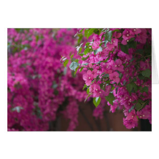 Cartes L'Italie, Sicile, Cefalu, cour fleurie par