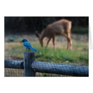 Cartes L'oiseau et les cerfs communs subsistent en dépit