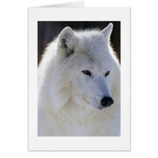 Cartes Loup blanc