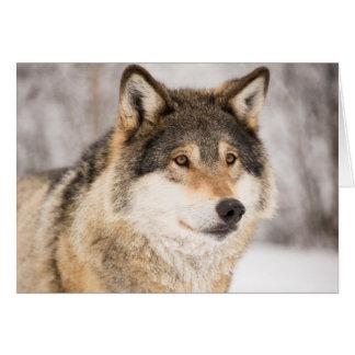 Cartes Loup dans une forêt d'hiver