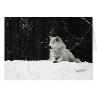 Cartes Loup de neige