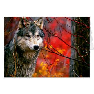 Cartes Loup gris dans le beau feuillage rouge et jaune