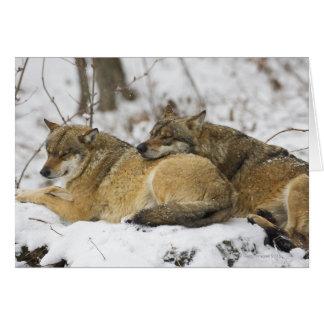 Cartes Loups dans le bois de Bawarian