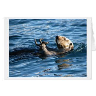 Cartes Loutre de mer
