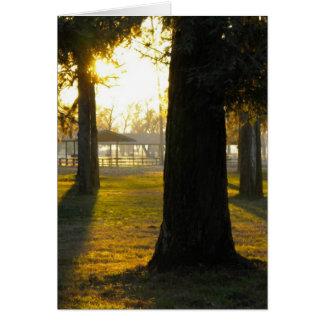 Cartes Lumière du soleil dans les arbres