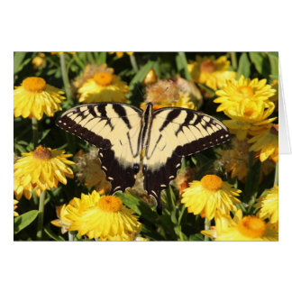 Cartes Machaon oriental de tigre