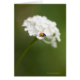 Cartes Macro image de Ladybird sur une fleur sauvage
