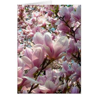 Cartes Magnolia