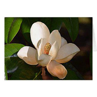 Cartes Magnolia du Mississippi