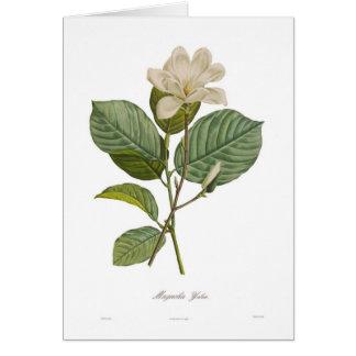 Cartes Magnolia yulan