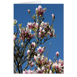 Cartes magnolias et ciel