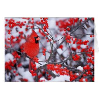 Cartes Mâle cardinal du nord, hiver, IL