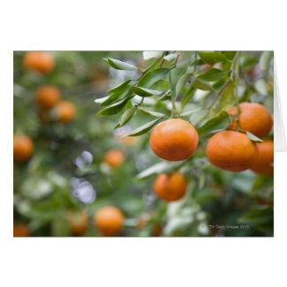 Cartes Mandarines accrochant dans l'arbre