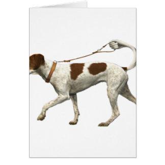 Cartes Marcheur de chien - queue de chien - saint Germain