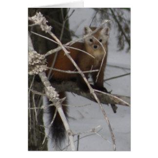 Cartes Martre de pin nord-américain