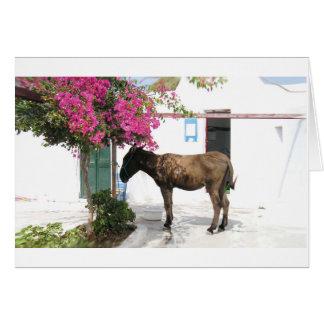 Cartes mascotte Opa d'âne de GreekIslandHouse.com !