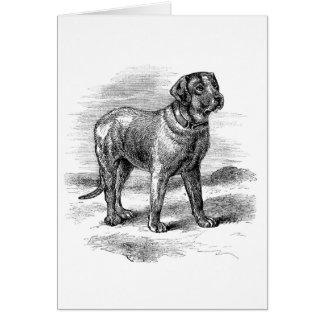 Cartes Mastiff anglais vintage,
