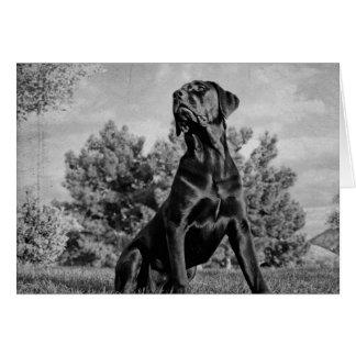 Cartes Mastiff italien
