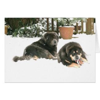 Cartes Mastiff tibétain Caspar et Jampo