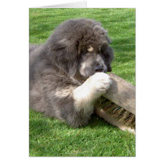 Cartes Mastiff tibétain Jampo avec le balai