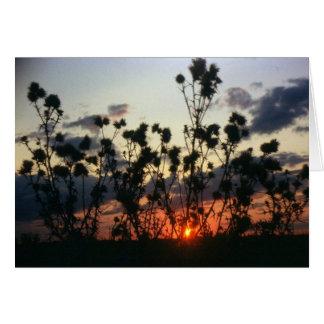 Cartes Mauvaises herbes et coucher du soleil