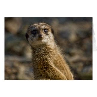 Cartes Meerkat