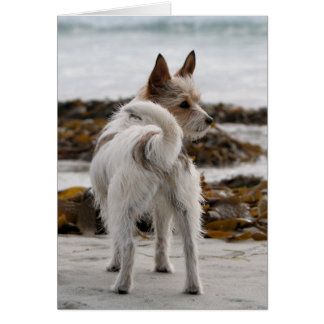 Cartes Mélange de Jack Russell Terrier - Winnie - Oman